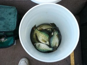 Nothing Quite Like a Bucket Full of Crappie